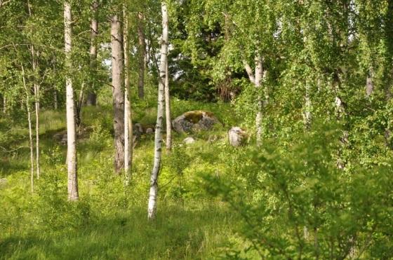 vårtecken (800x531)
